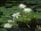 掛川花鳥園 2012-09-07
