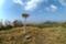 烏帽子岳(熊本県) 一等三角点
