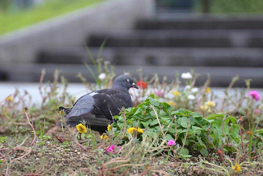 辛島公園 2012-09-03 14:54:46