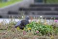 [野鳥][鳥]辛島公園 2012-09-03 14:54:46