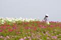 [花]くじゅう花公園 2006-09-30 14:13:47