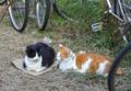 [猫]根津 2012-10-27 13:53:26