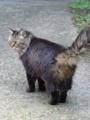 [猫]ガーネットちゃん?@根津 2012-11-02