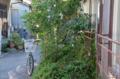 [東京][街角]根津 2012-10-19 11:31:03