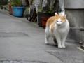 [猫]根津 2012-11-05