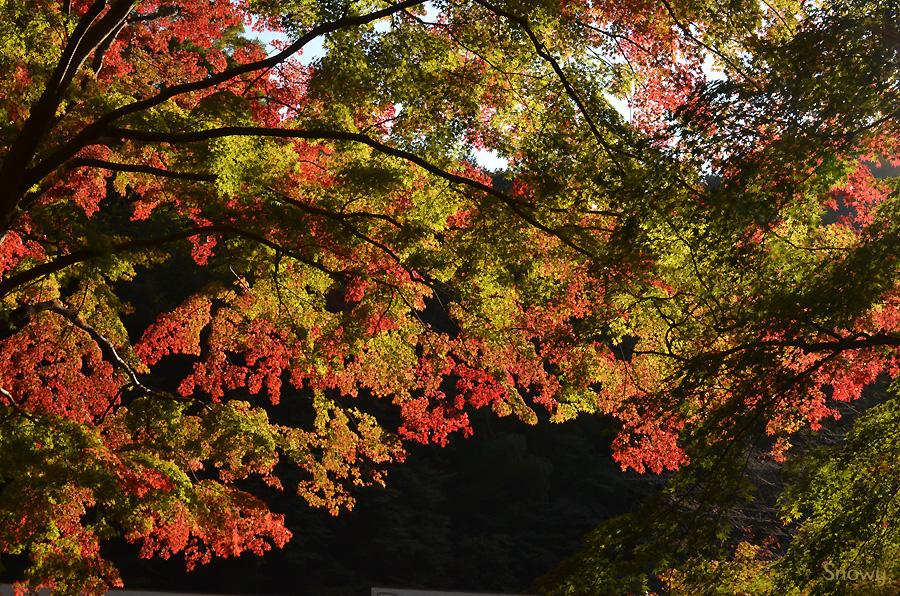 高尾山清滝駅前 2012-11-09 14:31:32