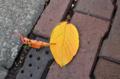 [葉]さようなら桜の葉 2012-11-07 15:24:13