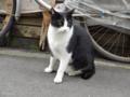 [猫]根津 2012-11-13 11:42:40
