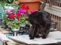 [猫]根津 2012-11-15