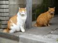 [猫]根津 2012-11-13 11:42:24