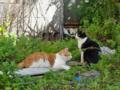 [猫]根津 2012-11-08 11:27:28