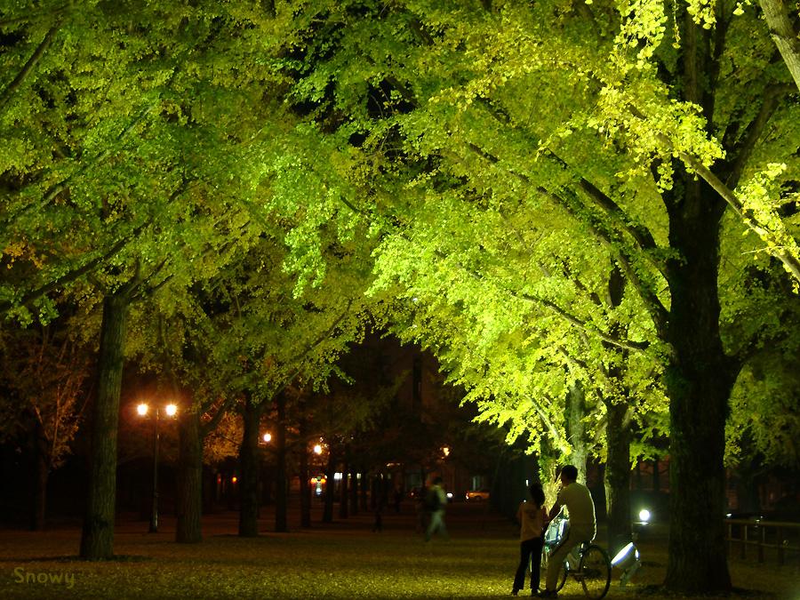 熊本県庁 2004-11-14 17:46:37