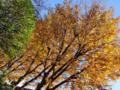 [東京][街角]根津 2012-12-05 11:01:08