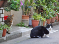 [猫]根津 2012-12-05 11:00:28
