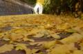 [東京][街角]本郷通り 2012-12-06 11:52:59