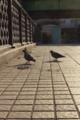 [東京][街角]昌平橋 2012-12-06 14:24:44