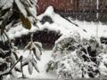 [東京][雪]2013-01-14 13:48:44