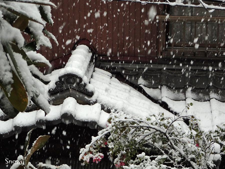 f:id:Snowowl:20130114210546j:image:w640