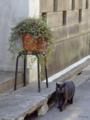 [猫]根津 2013-02-21 11:01:34