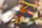 モミジの盆栽 2013-02-28