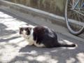 [猫]根津 2013-03-12