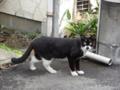 [猫]千駄木 2013-03-14