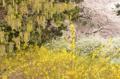 [東京][花][公園]新宿御苑 2012-04-07 14:35:10