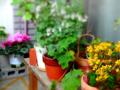 [園芸]2013-04-12
