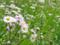 春紫苑@根津 2013-04-24