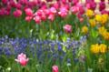 [公園][花]国営ひたち海浜公園 2013-04-27