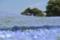 国営ひたち海浜公園 2013-04-27