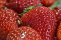 [果物]いちご