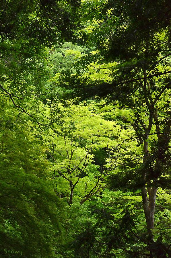 高尾山 2013-05-13