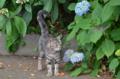 [猫]住吉神社 2013-05-27 10:18:06