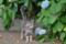住吉神社 2013-05-27 10:18:06