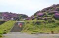 [熊本]ミヤマキリシマ@中岳火口近く 2013-05-25