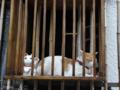 [猫]根津 2013-06-09