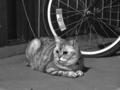 [猫]谷中 2013-06-15