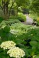 [東京][公園][花]府中市郷土の森博物館 2010-06-09