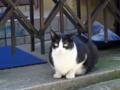 [猫]根津 2013-06-27