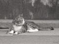 [猫]根津 2013-07-22