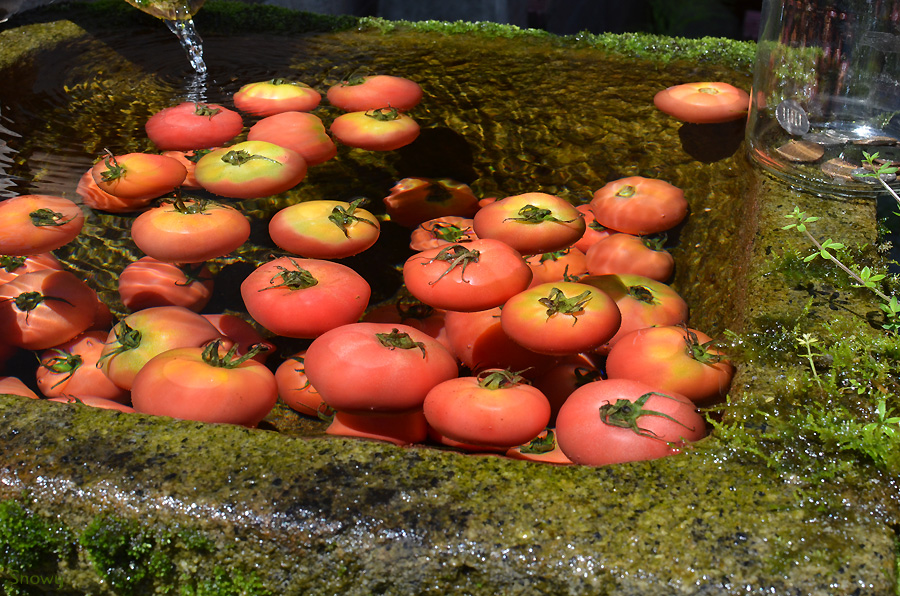 池山水源 2011-08-27