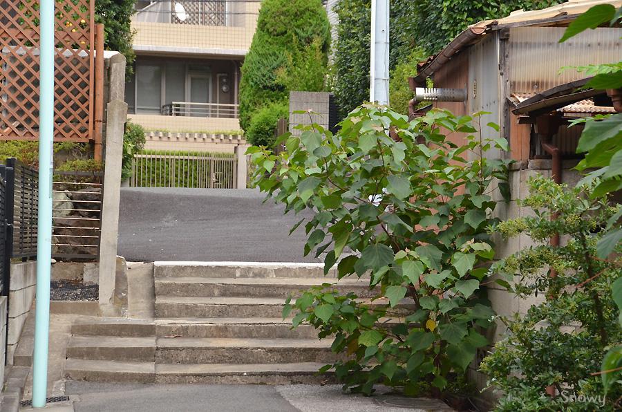 文京区弥生 2013-07-28