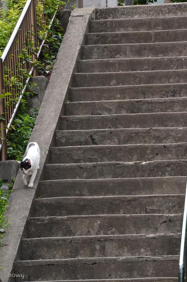 藪下通りの階段を下る猫 2013-07-28