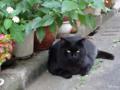 [猫]根津 2013-08-05