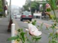 [街角]谷中 2013-08-23
