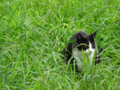 [猫]根津 2013-08-22