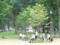 上野恩賜公園 2013-08-23