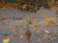[花]金木犀 2013-10-09