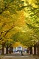 [東京][葉]東京大学安田講堂前 2013-11-21